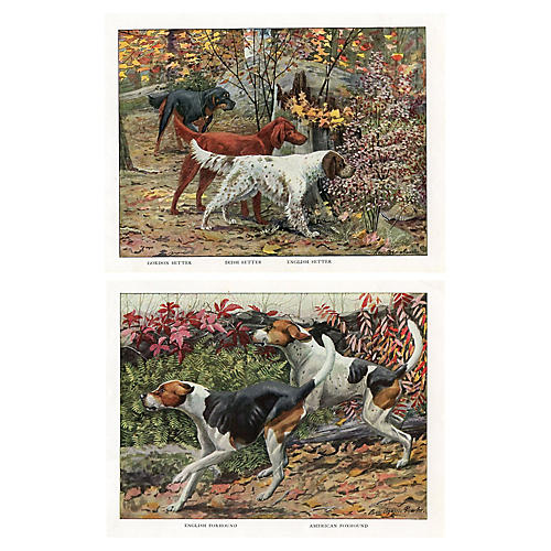 Setter and Foxhound Prints, Pair