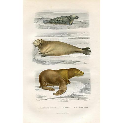 Walrus and Seal Print, 1880