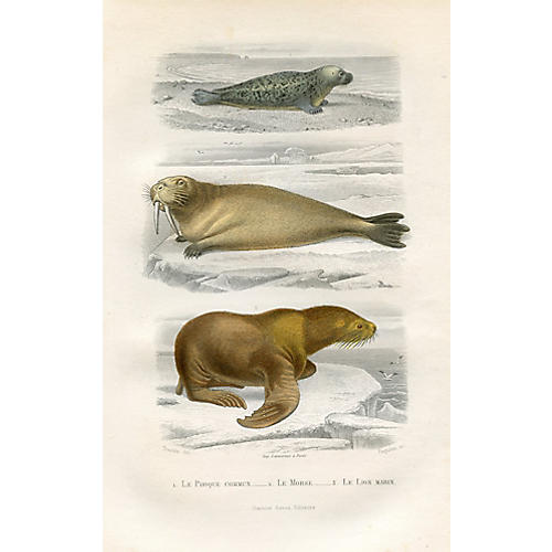 Walrus and Seal Print, 1880