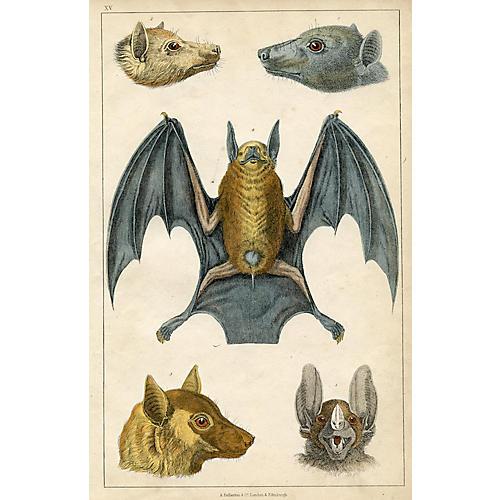 19th-C. Bat Print