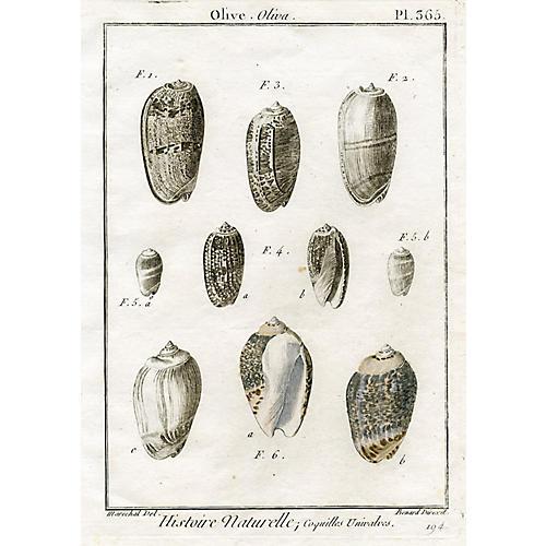 French Seashell Engraving, c. 1800