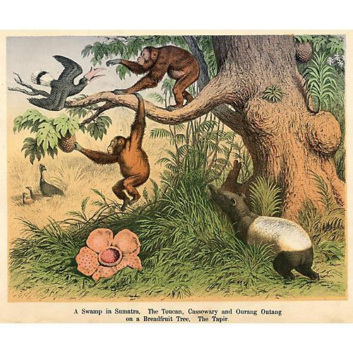 Swamp in Sumatra, C. 1860