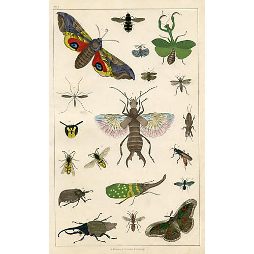 19th-C. Hand Colored Insect Print