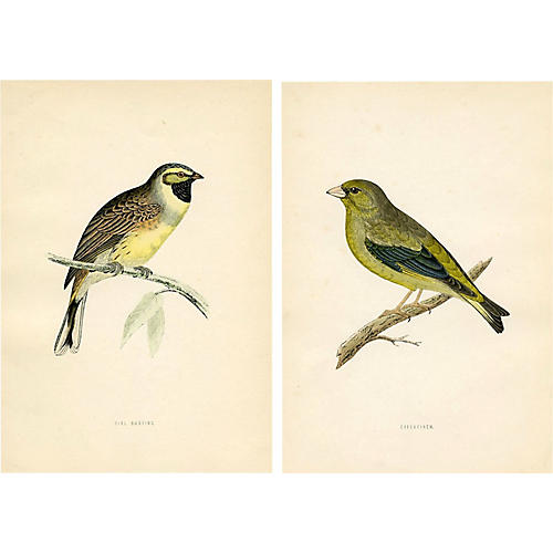 19th-C. Bunting & Finch Prints, Pair