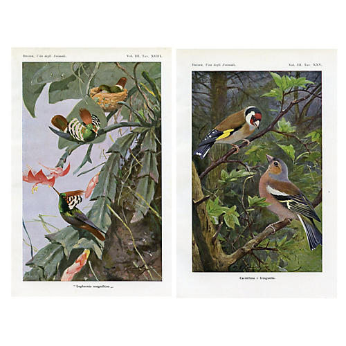 Italian Bird Prints, Pair