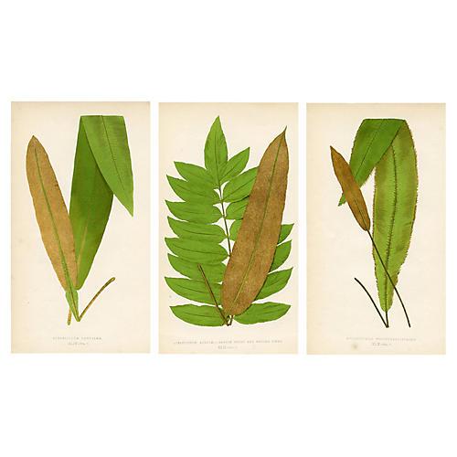 British Ferns, S/3