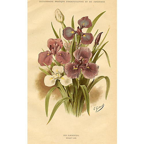 Japanese Water Iris, 1894