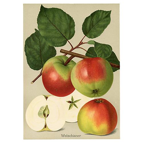 German Apple Print, 1908