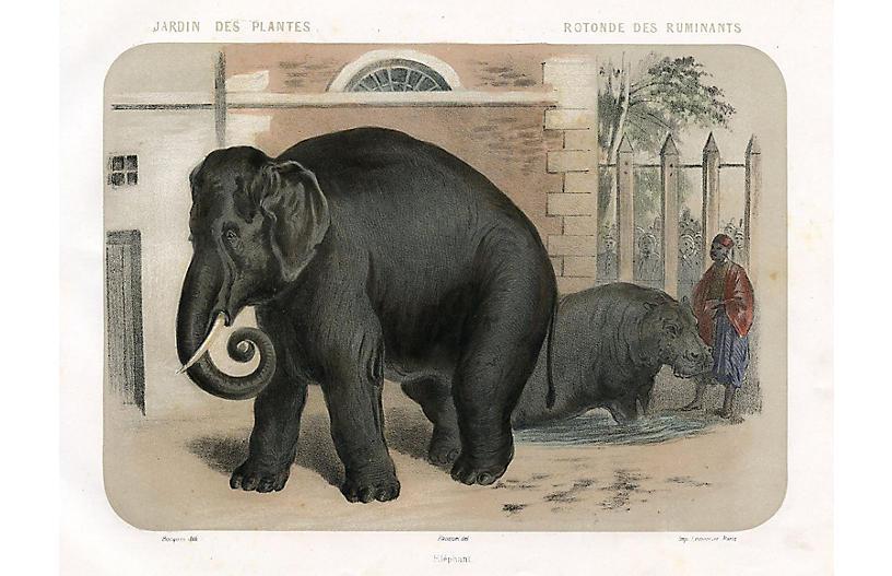 Elephant at a Paris Zoo, C. 1850