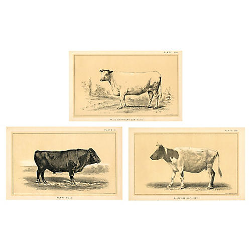 59532a5d313 1880s Cow   Cattle Prints