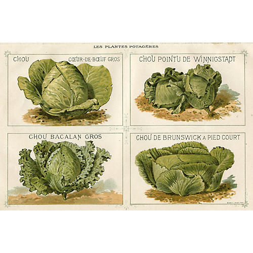 Lithograph of French Cabbages, 1891