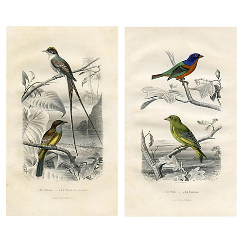 19th-C. Bird Prints by E. Travies, Pair