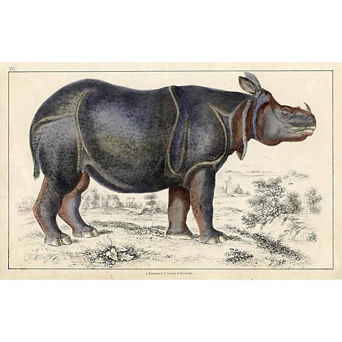 Rhinoceros Lithograph, 1847