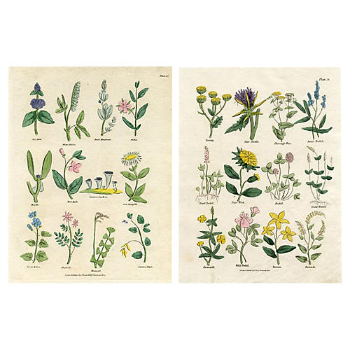 1830s Herbal Engravings, Pair