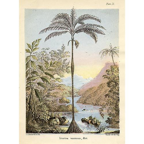 Copa Palm, 1856