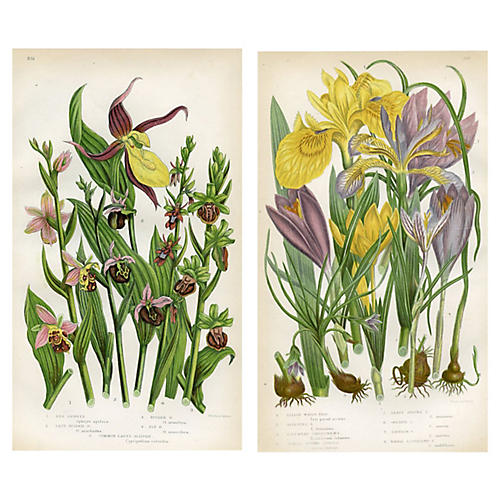 British Botanicals by Anne Pratt, Pair