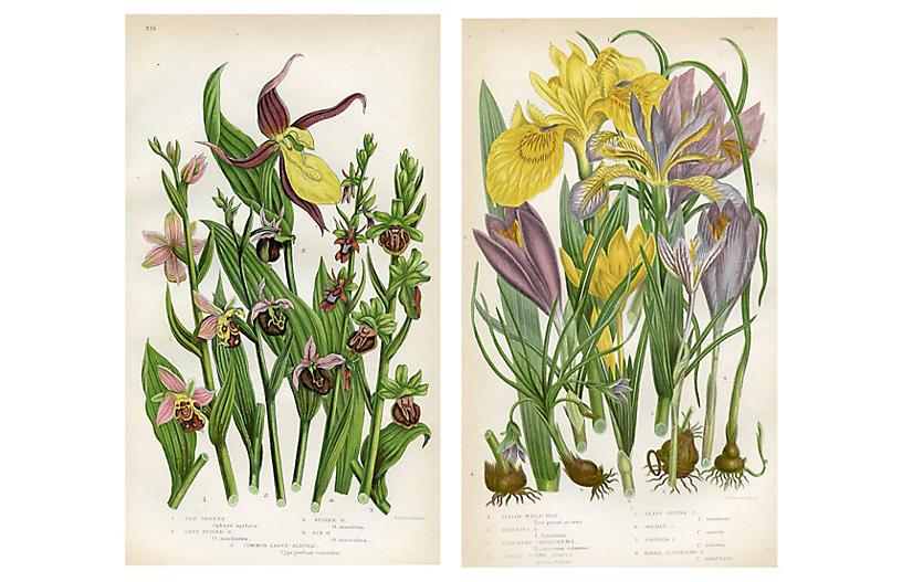 British Botanicals by Anne Pratt, Pair