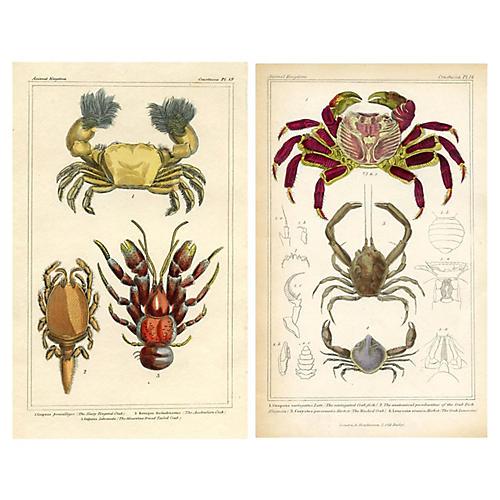 1830s Crab Engravings, Pair