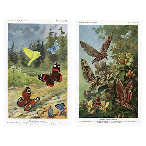 Italian Butterfly and Moth Prints, Pair