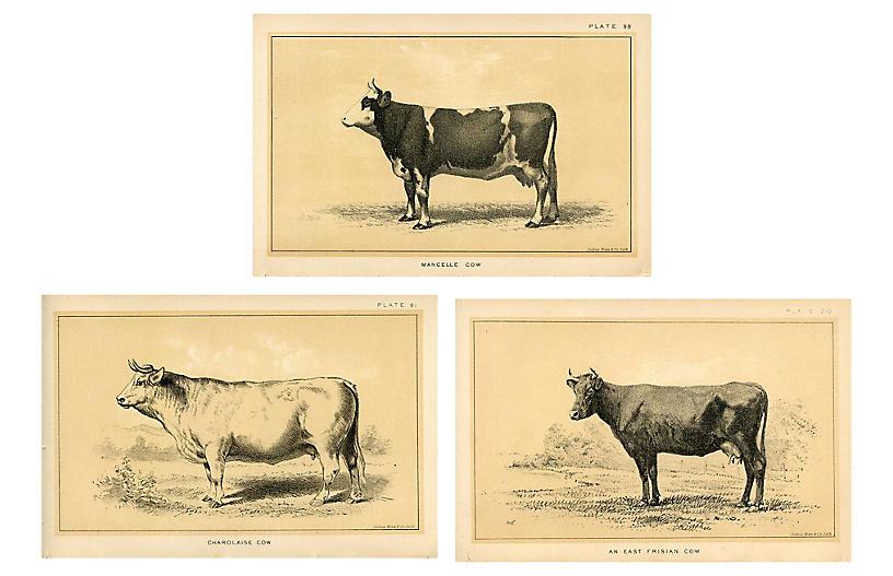1880s Cow Prints, S/3