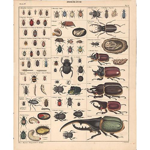 Diversity of Beetles