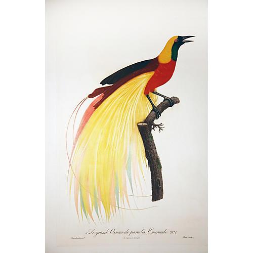 Oiseau de Paradis #1