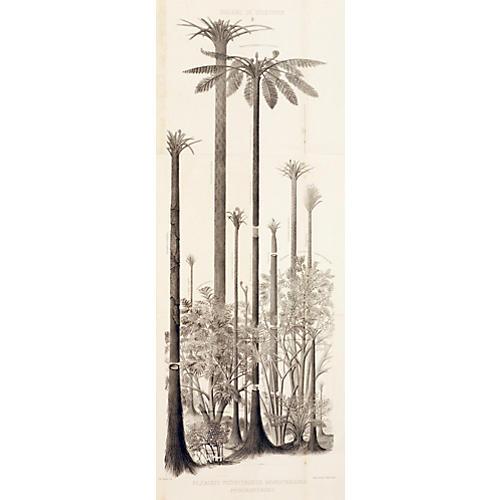 Rare Fossilized Trees