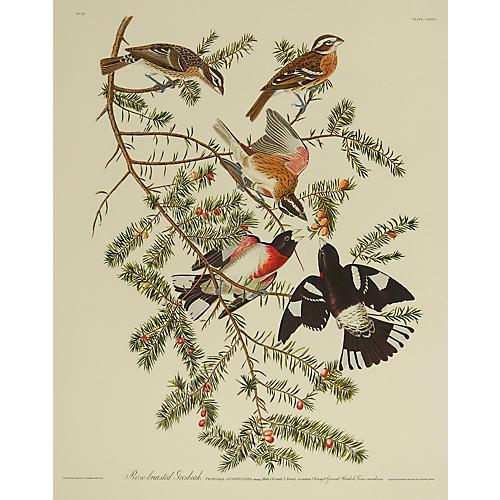 Rose-Breasted Grosbeak by J. Audubon