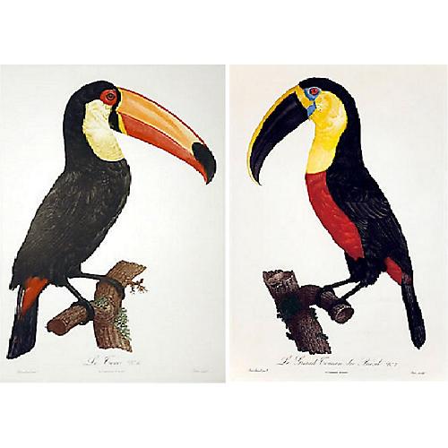 Toucan Engravings, S/2