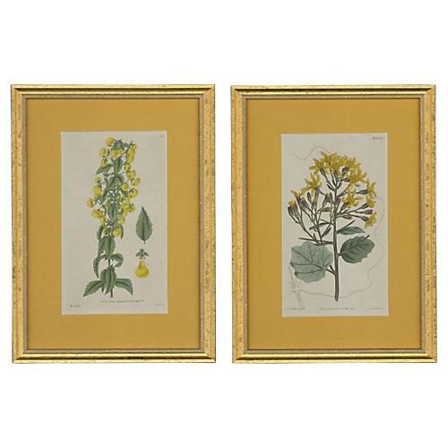 Framed Curtis Botanicals S/2